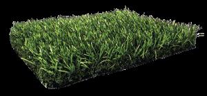 Sweet Grass PL354