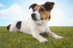 Pet Turf Systems